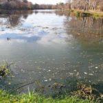 Глазынинский пруд начнут очищать в конце июля